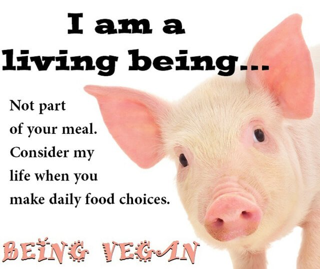 Being Vegan poster featuring a pig