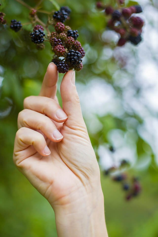 woman picking wild blackberries