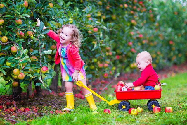 A boy and girl pick apples in a garden