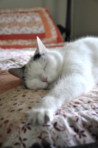 Luna sleeps on a bed