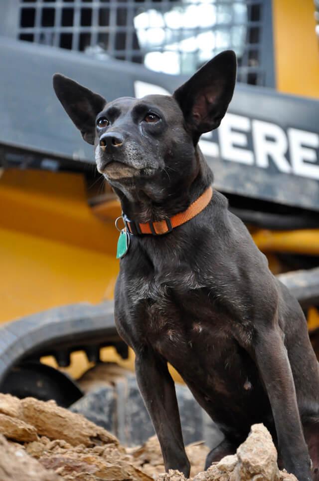 Korey Constable's dog River observes