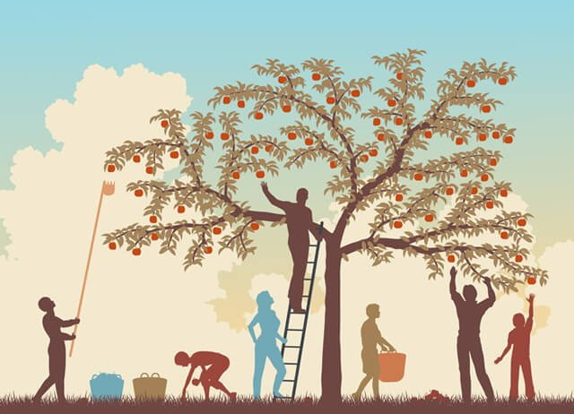 Illustration of a family harvesting apples from a tree