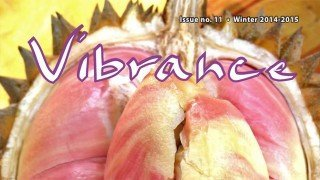 Cover of Vibrance magazine issue No. 11