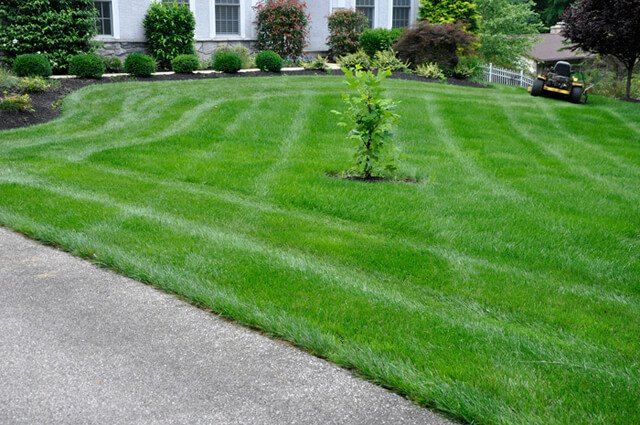Korey Constable photographs a lawn whose perimeter he just mowed