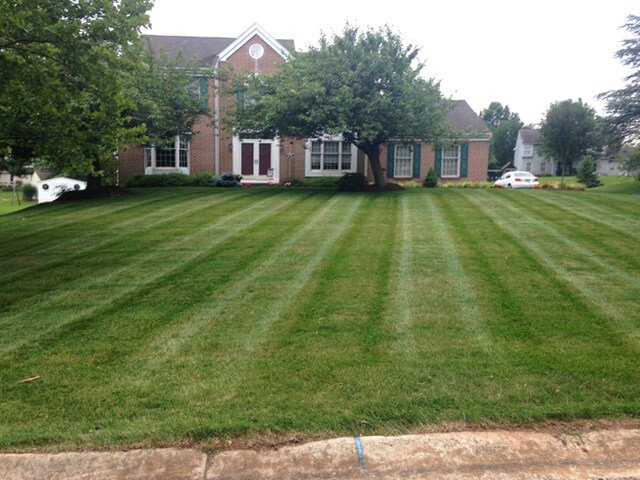 Angled stripes stand out on a suburban Philadelphia lawn