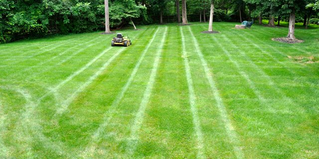 Stripes are visible on a mowed lawn